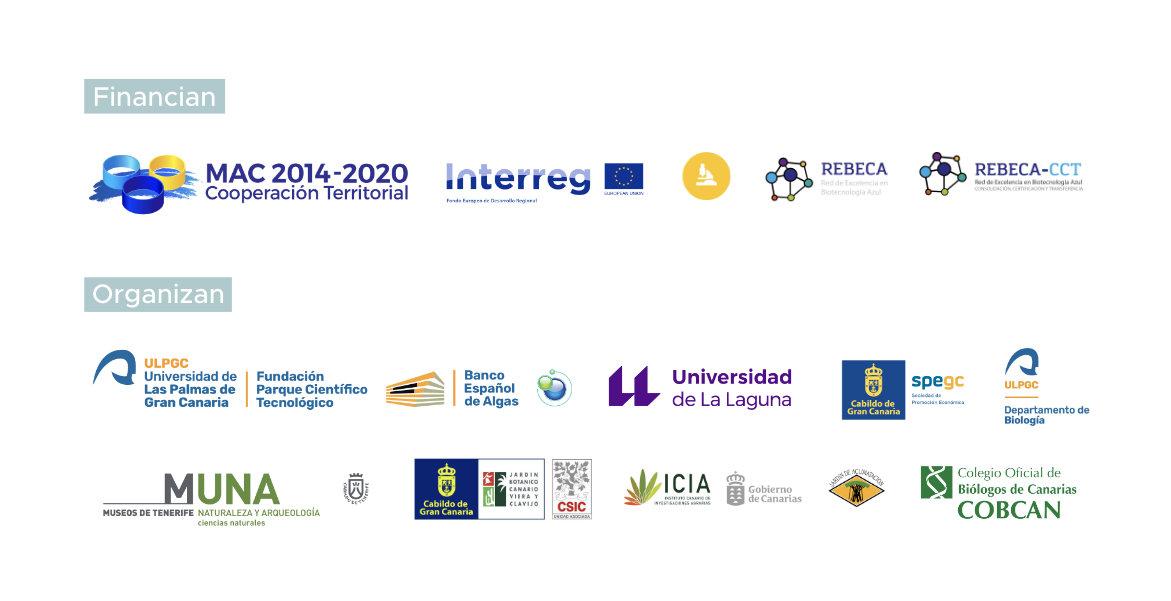 Logotipos proyecto Rebeca