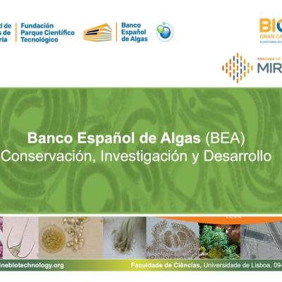 UNIVERSIDAD DE LISBOA: Banco Español de Algas Conservación, Investigación y Desarrollo